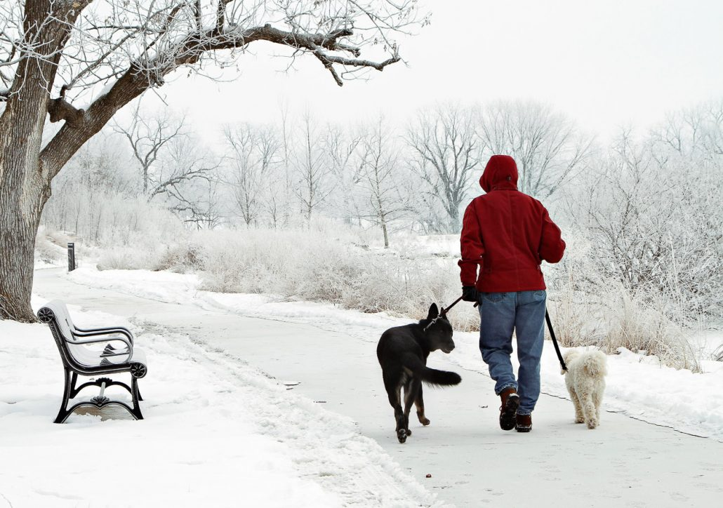 Sandra Knoerr enjoys a crisp morning while walking Maggie, left, and Jed, right, on Jan. 27th at Stephens Lake Park. Columbia residents woke up to many outdoor surfaces covered by hoar frost, a type of frost distinguished by white ice crystals that grow during cold clear nights.