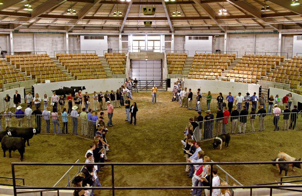 Future Farmers of America students score Angus heifers and market hogs during the judging competition of the 83rd annual Missouri FFA Convention on April 14th at the Trowbridge Livestock Center. Students were given 12 minutes per category of animals to inspect and score the livestock.